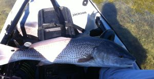 Lower Keys Redfish